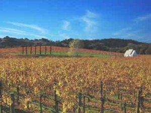 av-WCT-4-vineyard